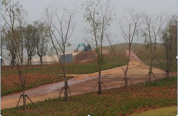 赣东大堤树木养护